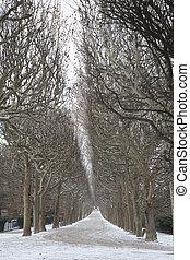 inverno, plantes, paris, árvore, des, parque, caminho, alinhado, jardin