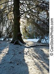 inverno, silhouette, foresta, albero