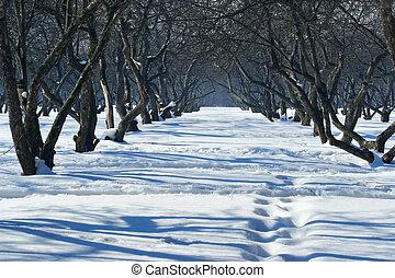 inverno, soleggiato, chiaro, parco, passeggiata, giorno