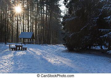 inverno, strada, foresta