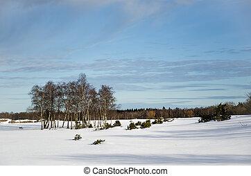 inverno, vidoeiros