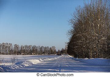 inverno, vuoto, rurale, giorno, strada, foresta