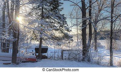 inverno, woods., indietro, mattina, cottage, alba