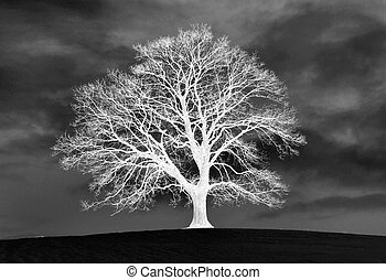 Invert - inverted photo of tree on a hill