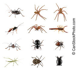 Invertebrate collection - Collection of African...