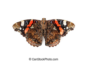 Inverted dry butterfly isolated. - Inverted dry butterfly...