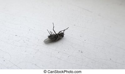 Inverted fly jerks legs on white background