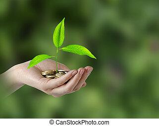 investieren, zu, grünes geschäft