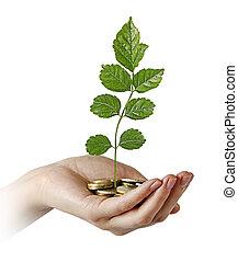 investir, affaires vertes