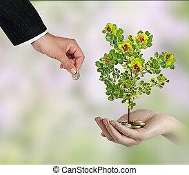 investir, para, negócio verde