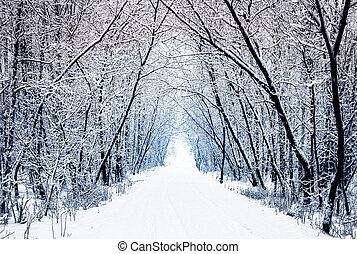 invierno, bosque, callejón, con, árboles