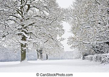 invierno, bosque, nieve escena