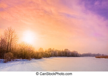 invierno, bosque, paisaje