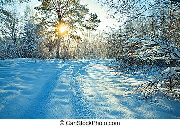 invierno, camino, rural, ocaso, paisaje, bosque