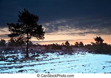 invierno, campo, vibrante, encima, paisaje de nieve, cubierto, salida del sol