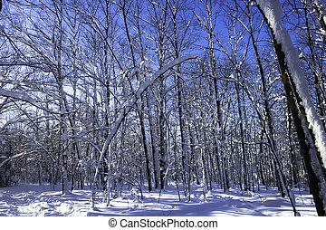 invierno, escena