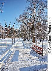 invierno, hermoso, parque, con, muchos, grande, árboles, bancos