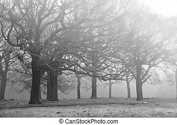invierno, otoño, otoño, brumoso, paisaje, de, bosque, y, avenida, de, árboles