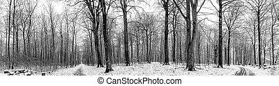 invierno, paisaje, de, un, bosque, con, nieve, en, panorama