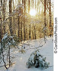 invierno, salida del sol, (1)