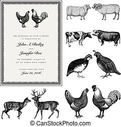 invitere, mandlig, bryllup, kvindelig, sæt, vektor, vinhøst, dyr