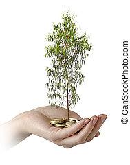 inwestując, do, zieleń handlowa