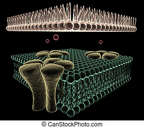Ion Channels of a Cell - 3D rendering of Ion channels on the...