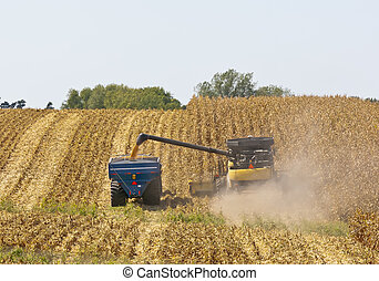 Iowa Cornfields - A combine and a tractor work to harvest a ...