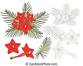 Ipomoea Quamoclit - Cypress vine Flower. Vector...