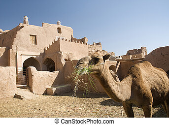 irán, adobe, camello, casa, iraní, tradicional, oasis, arquitectura, hogar, desierto, garmeh