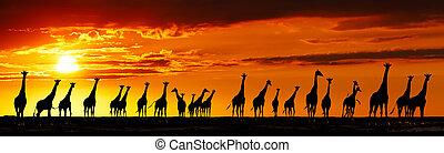 irafa, silhouettes, v, západ slunce