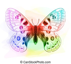 iridescen, butterfly., colours.