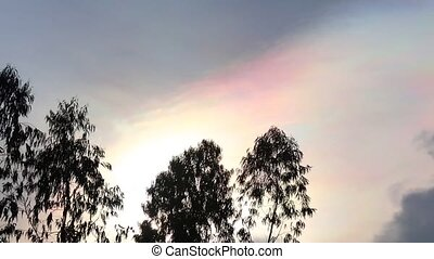 Iridescence Sky Phenomenon And Treetops Time Lapse -...