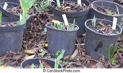 plants  in black plastic pots