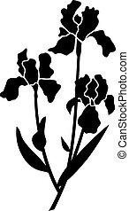 iris, black