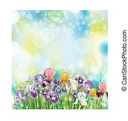 iris, bloemen, achtergrond