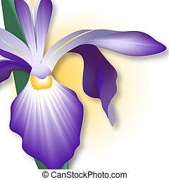 Close-up of iris. Digital illustration. Gradient mesh.
