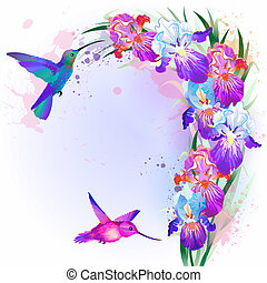 iris, flores, vector, tarjeta, colibrí