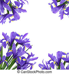 Iris flowers forming an abstract background. Blue Flag variety.