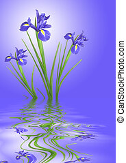 Iris Flower Tranquility - Zn abstract of blue iris flowers...