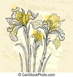 Iris flower vector illustration. - Floral background. Hand...