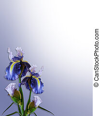 iris, invitation, ou, gabarit, bleu