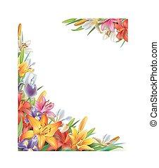 iris, lirios, flores, marco
