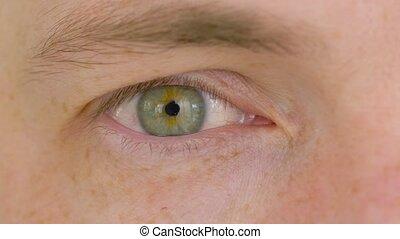 iris, oeil, haut, vert, fin, mâle