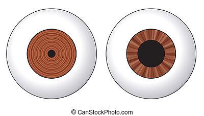 Eye, contraction of the iris
