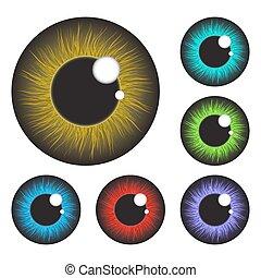 iris, set, oog, vrijstaand, realistisch, vector, ontwerp,...