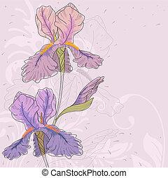 iris., vector