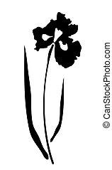 Iris - vector iris flower silhouette