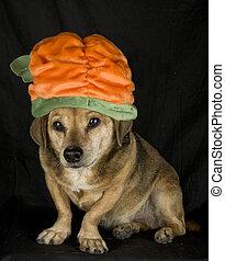 irish dog