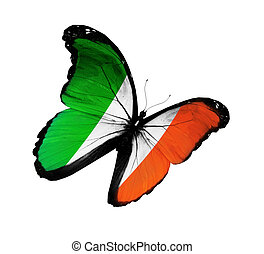 Irish flag butterfly flying, isolated on white background